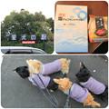 Photos: 愛犬の駅でお買い物