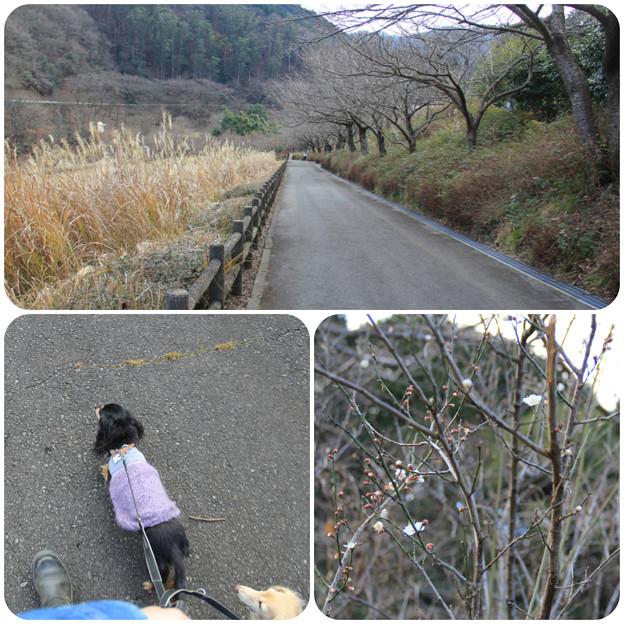 松川湖畔をお散歩