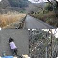 Photos: 松川湖畔をお散歩