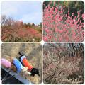 Photos: 梅林へ(こども自然公園2019年2月10日)