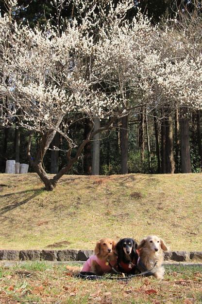 梅をバックに(こども自然公園2019年2月10日)
