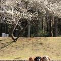 Photos: 梅をバックに(こども自然公園2019年2月10日)