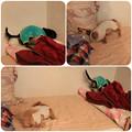 Photos: ベッドで大暴れ