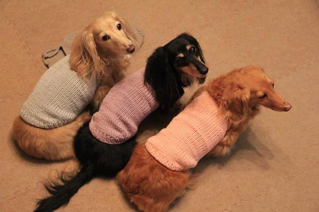 Photos: 手編みのキャミソール似合ってるでしょ
