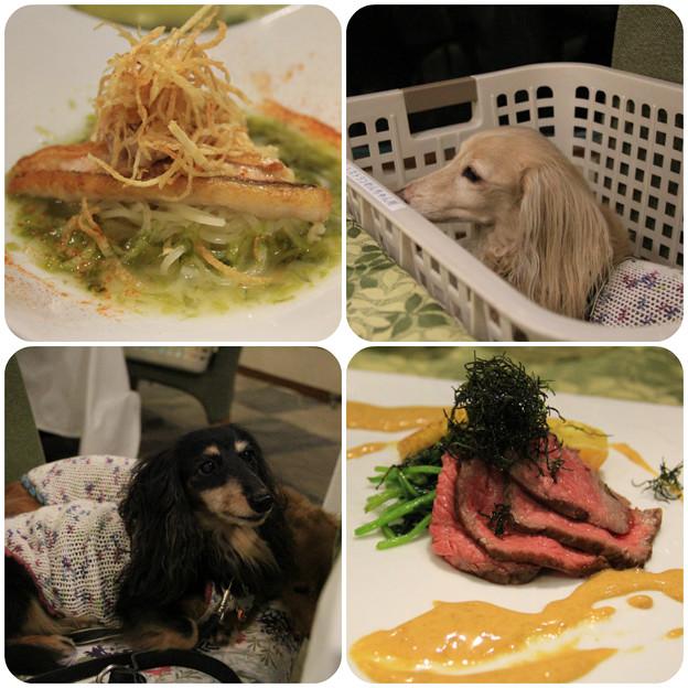 魚料理_肉料理