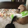枕にかぶせておいたタオルが・・・