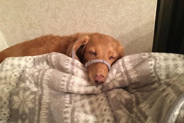 寝ちゃった
