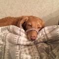 Photos: 寝ちゃった