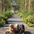 イングリッシュローズの庭で記念撮影