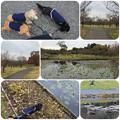 Photos: 渓流の梅園