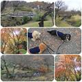 渓流の梅園2
