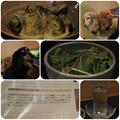 Photos: パエリア風パスタ_サラダ_池