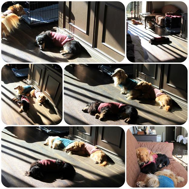 Photos: ひなたぼっこ&お昼寝