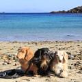Photos: 海をバックに(爪木崎水仙まつり2020年1月13日)