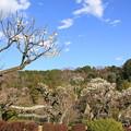 Photos: 薬師池公園梅園(2020年2月23日)