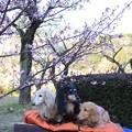 Photos: 河津桜とパチリ