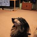 Photos: おめめキラキラ