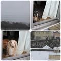 Photos: 雪降ってる