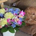 お花とメレ