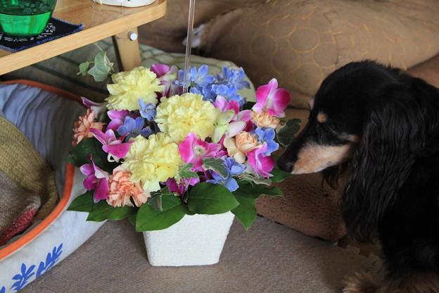 お花とプチ