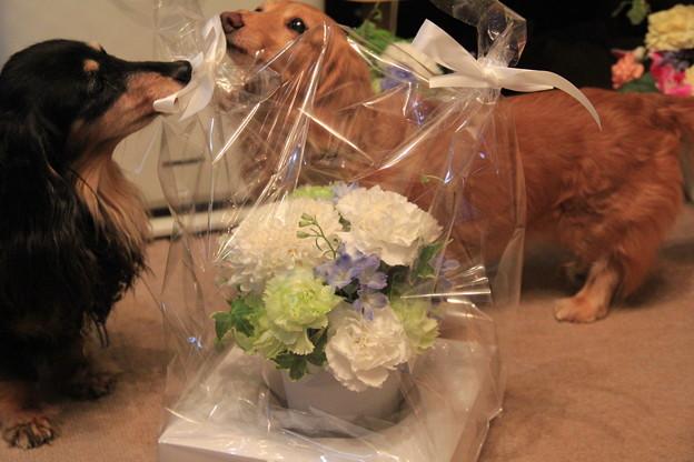 しゅーちょこ。さんからお花