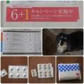 Photos: 予防薬キャンペーン中