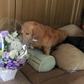 Photos: お花が届いたよ