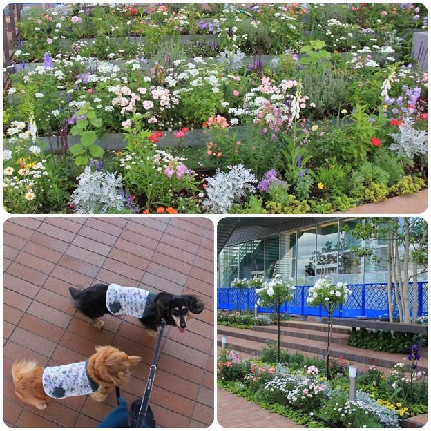 Photos: お花きれい