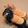 プチとメレに手編みのキャミソール