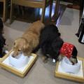 Photos: お互いのお皿をチェック