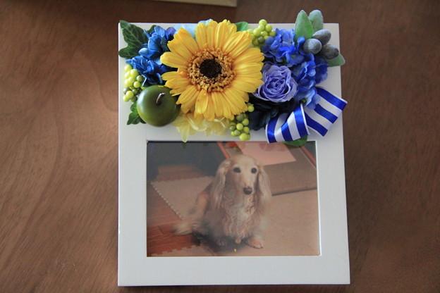 Photos: 写真入りのお花のフォトフレーム