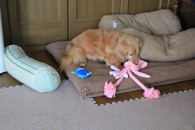 おもちゃ見つけた