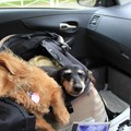 ドライブ中はお昼寝タイム