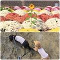ざる菊とひまわり
