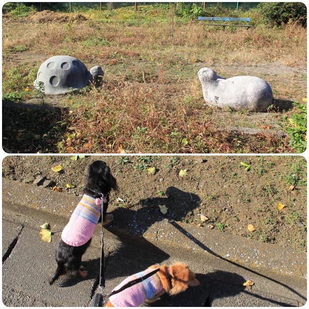 Photos: ウサギとカメ