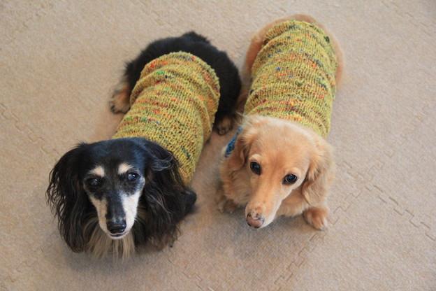 手編みのニット似合ってるでしょ