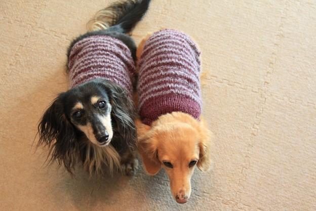 手編みのニットだよ