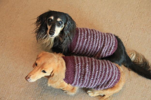 Photos: 手編みのニット似合ってるでしょ