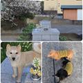 Photos: 動物慰霊碑へ