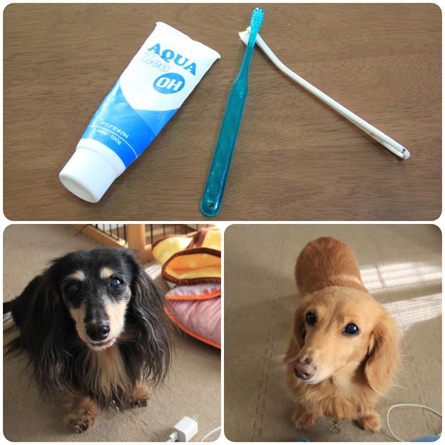 歯磨きしようね