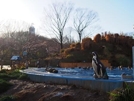 20140330 ペンヒル 雨上がりのペンギンヒルズ02