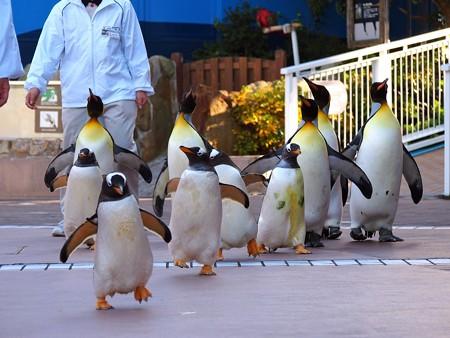 20121207 アドベン ペンギンパレード05