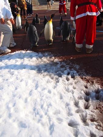 20131207 アドベン ペンギンパレード33