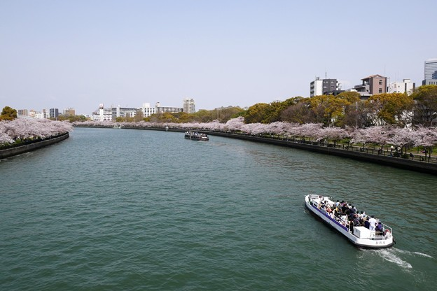 桜 大川 舟遊び