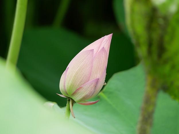 写真: ピンクのモーツァルト