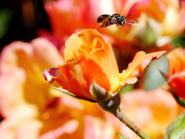 Photos: Worker Bee