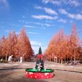 Photos: 冬樹足りなば