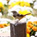 Photos: 春風のいたずら