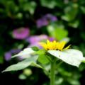 Photos: 夏への扉