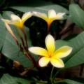 Photos: 例の花